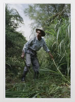Jonathan Moller, Santiago clears the brush before digging begins where he and others believe the remains of a relative killed by the army are buried, type C color print, 20 x 16 inches, edition # 3/25