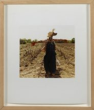 "William Wegman, ""Scarecrow"", cibachrome print,14 x 11 inches"
